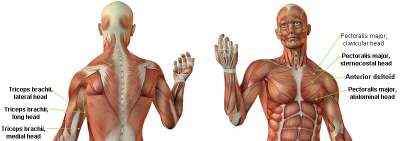 how to develop your outer chest